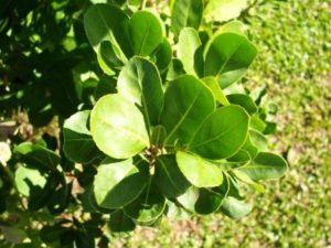 plantas para la circulacion